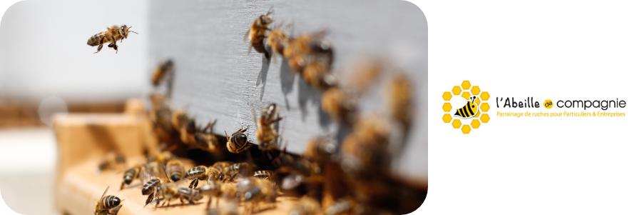 Parrainer des abeilles avec l'Abeille de Compagnie