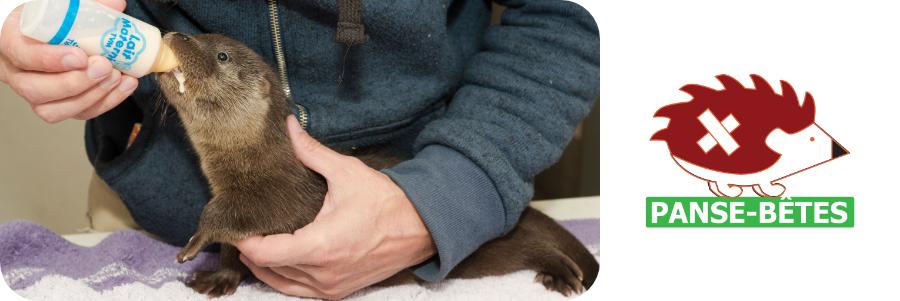 La protection des loutres avec Panse-Bêtes