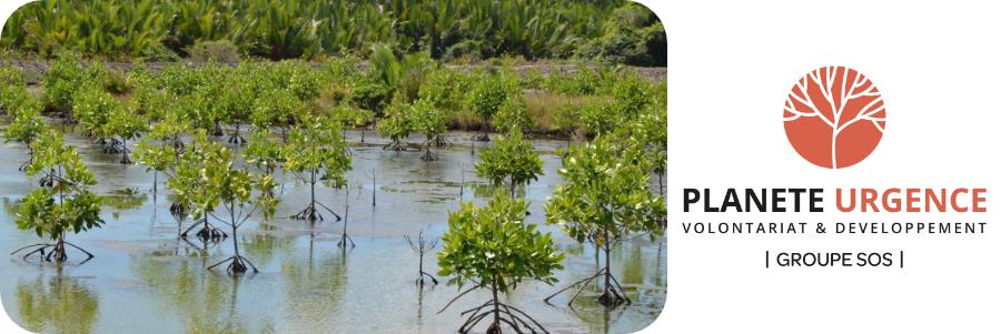 Préserver la mangrove avec Planète Urgence